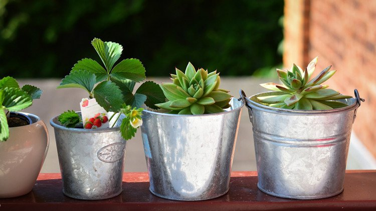 best balcony and patio plants