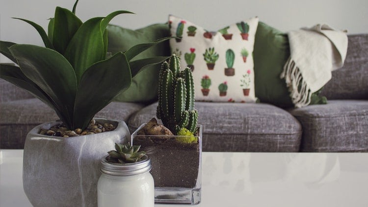 home decor must haves